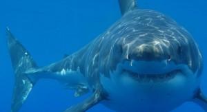 sharkNEWS