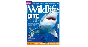 2 Aug BBC Wildlife Magazine
