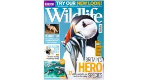 10 April BBC Wildlife redesign