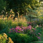 MyGardenSchool garden design image