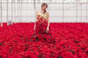 International Poinsettia Day - living poinsettia dress