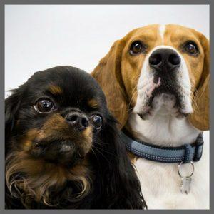 Spotty Dog Communications - Zac and Nelson