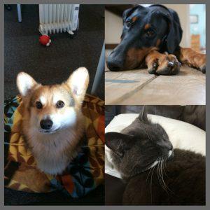 Essential Communications - Bert, Kato and Smokey