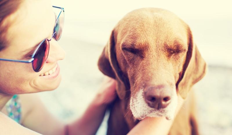 Sad dog and happy woman